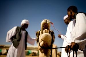 camel01_lres