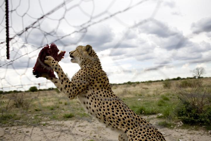 animals03_lres